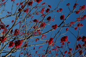 Lumière et fruits d'automne. Photo: Daniel Michaud